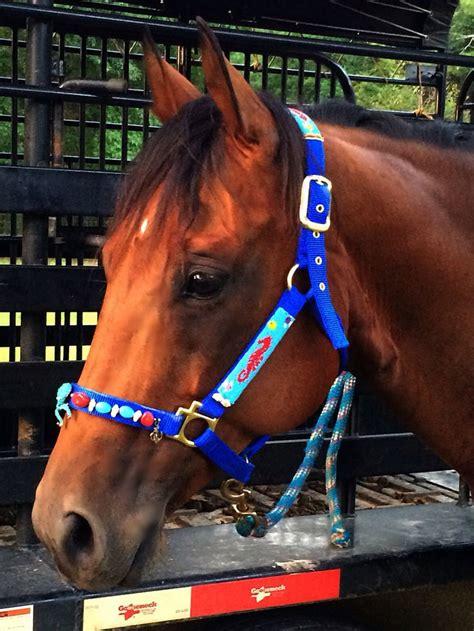 halter horse