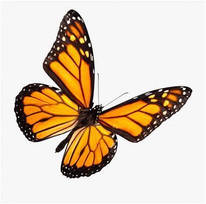 Butterfly Monarch Clipart Transparent Cartoon Heather Background
