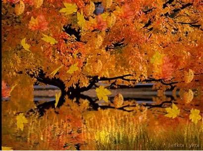 Leaves Falling Autumn Fall Trees Colors Animation