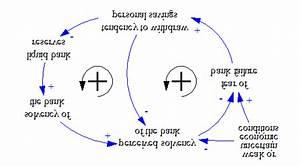 Causal Loop Diagrams Of Alternative  Complementary Bank