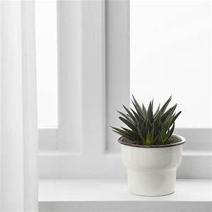 Schöne übertöpfe Für Drinnen : citronsyra bertopf drinnen drau en wei ikea sterreich ~ Watch28wear.com Haus und Dekorationen