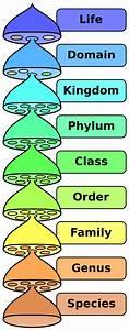 Biological_classification – DBriers.com