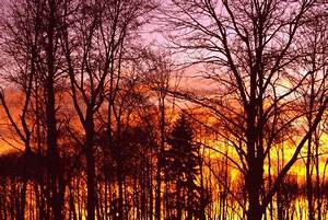 Trees Sunrise Sunsets & Nature Background Wallpapers on