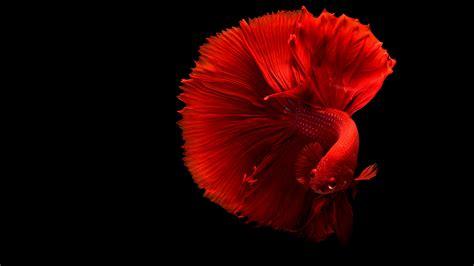 Wallpaper Redfish, Underwater, 4k, Animals, #6841