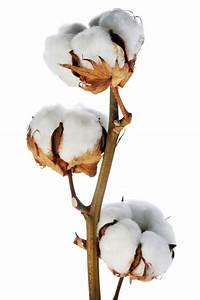 King Of Cotton : king cotton ~ Nature-et-papiers.com Idées de Décoration