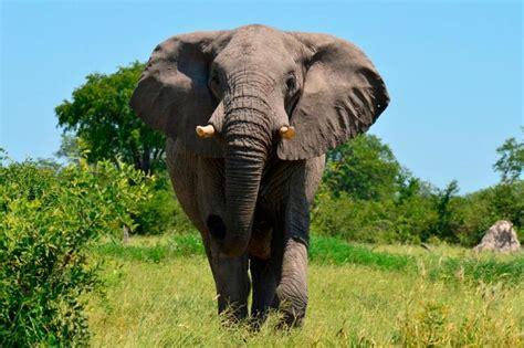 popular zoo animals taste  mental floss