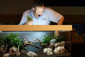 Aquarium Gestaltung Bilder : aquarium einrichten start wie ~ Lizthompson.info Haus und Dekorationen