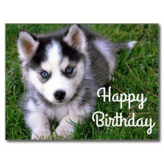 white husky happy birthday clipart   cliparts