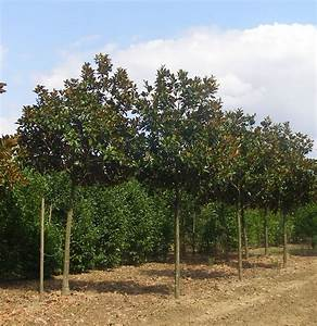 Arbres Fruitiers Nains En Pleine Terre : notre p pini re ~ Premium-room.com Idées de Décoration