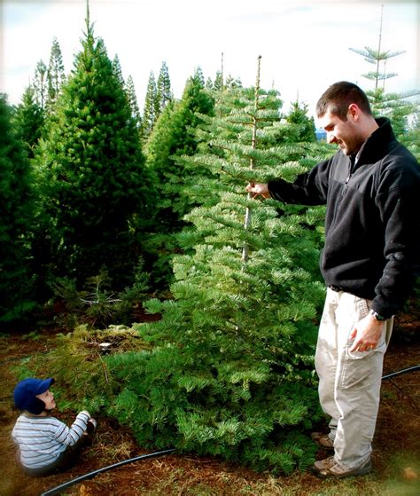 cut your own christmas tree this is a family tradition