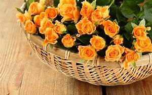 Roses, In, Basket