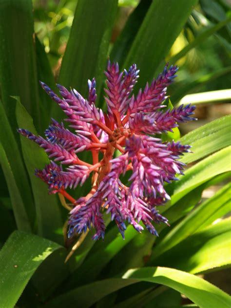 galveston texas moody gardens rain forest pyramid  spe flickr