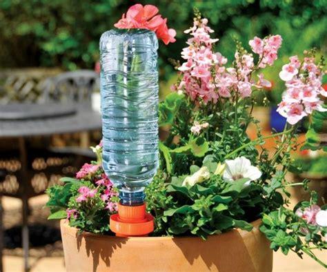 plante plein soleil en pot plante plein soleil en pot 28 images choix pour pot en plein soleil rufa scabrida ou autre