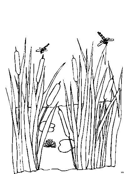 libellen ausmalbild malvorlage landschaften