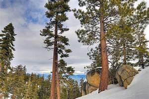 lake, , tahoe, , california, , nevada, , trees, , rocks, , winter, wallpapers, hd, , , , desktop, and, mobile, backgrounds