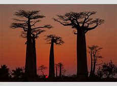 Madagascar travel Lonely Planet