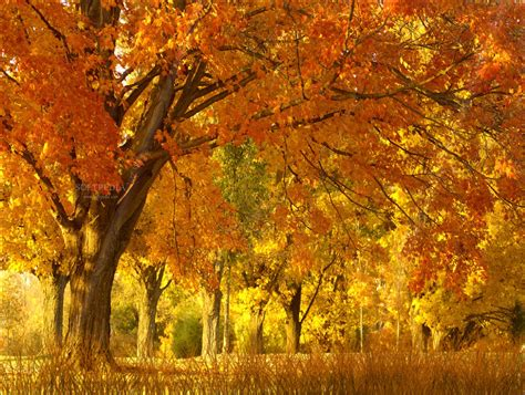 Free Animated Fall Wallpaper - fall season animated wallpaper