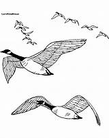 Coloring Geese Goose Pages Flying Wild Drawing Snow Sound Line Birds Printable Journal Coloringpages4kids sketch template