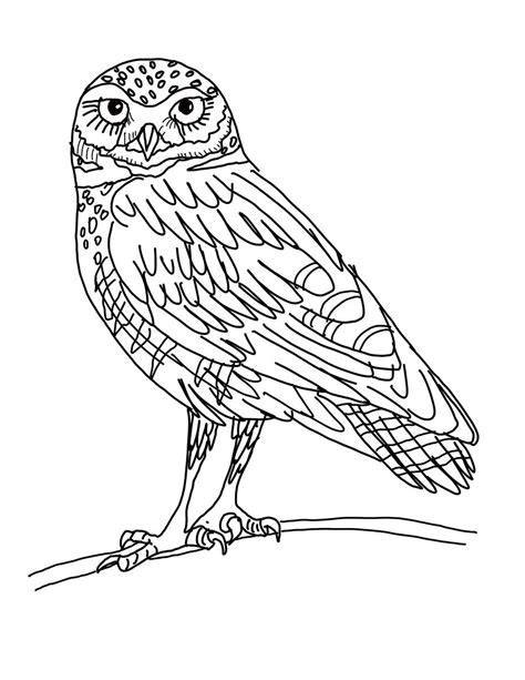 owl color drawing  getdrawingscom   personal
