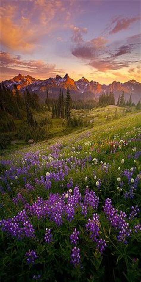 rainier ridge rams u2022 west himalayas india valley of flowers national park is