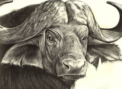 african wild animals drawings