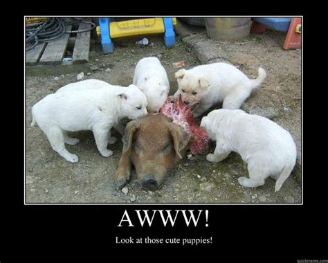 Awww Meme - awww look at those cute puppies motivational poster