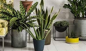 Pflanzen Die Kaum Licht Brauchen : ber ideen zu pflegeleichte zimmerpflanzen auf pinterest topfpflanzen zimmerpflanzen ~ Markanthonyermac.com Haus und Dekorationen