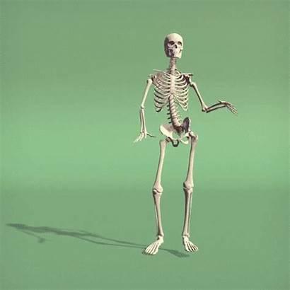 System Skeletal Skeleton Musculoskeletal Movement Bones Important