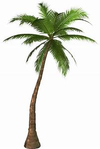 Coconut Tree PNG Image PNG Arts