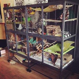 Best 25 Rat Cage Accessories Ideas On Pinterest Diy Rodent Toys Diy