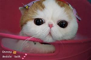 28 best images about Snoopy Cat on Pinterest | Bubble ...