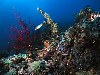 Underwater Sea Wallpapers Ocean Papua Guinea Under