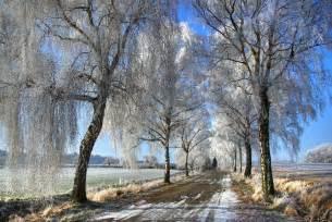 winter trees winter photo 22173930 fanpop
