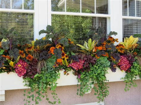 window boxes bring  fall garden  life home wizards