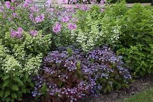 Hortensien Kombinieren Mit Anderen Pflanzen : hortensien das passt dazu mein sch ner garten ~ Eleganceandgraceweddings.com Haus und Dekorationen