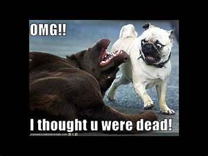 Funny Animal Quotes - YouTube