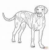 Hound Coloring Plott Fox Printable Dog Labradoodle Kleurplaat Ausmalbilder Ausmalbild Hond Hund Tick Bulldog Template Til Tegning Tegninger Puppy Colouring sketch template