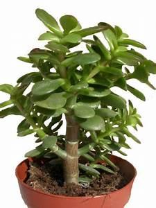 Bouture Plante Verte : plantes d polluantes d pollution de l air int rieur par les plantes plantes d 39 int rieur ~ Melissatoandfro.com Idées de Décoration