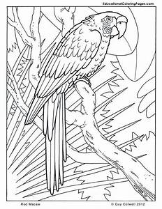 Coloring Pages Parrots - Coloring Home