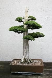 Baum Kleiner Garten : kleiner baum pflanzen pinterest und ~ Orissabook.com Haus und Dekorationen
