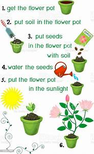 Instructions On How To Plant Flower In Sequence Of Easy