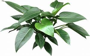 Paul' Web Logs: Alternative To An Air Purifier: House Plants
