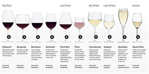 10 Different Types Of Wine Glasses Explained (infographic