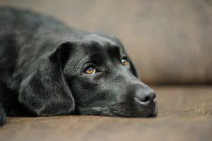 homoeopathische arzneimittel fuer hunde sepia