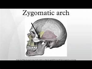 Zygomatic arch - YouTube