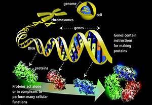 Genetics Basics