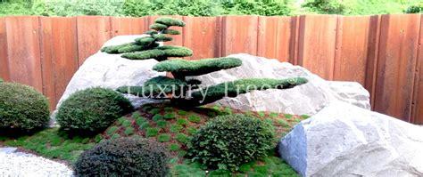 Pflanzen Für Asiatischen Garten by Bonsai Gartenb 228 Ume Gartengestaltung Bau Luxurytrees