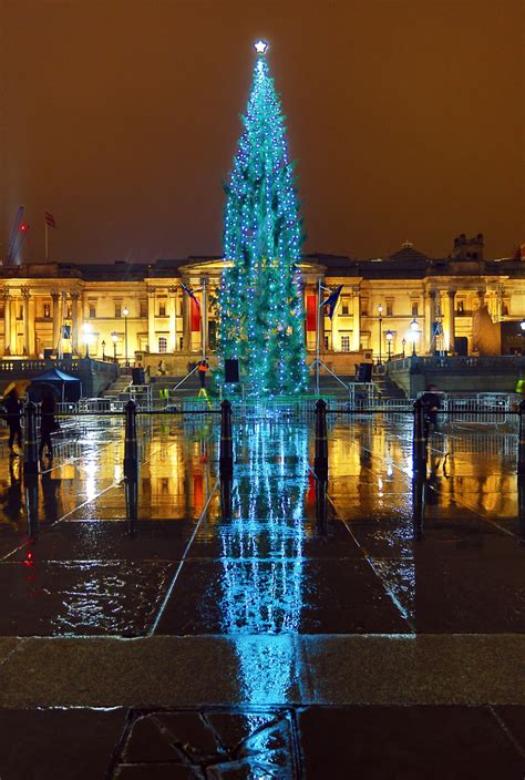 christmas trees   world  pictures life
