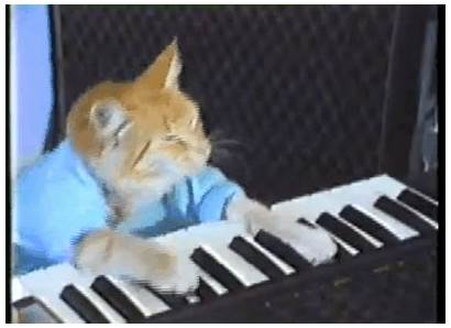 Keyboard Cat Gifs Related Awesome Internet Musical