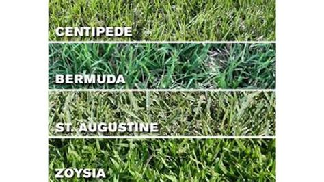 Difference Between Bermuda Grass and St Augustine Grass